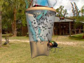 Недорогая ловушка для мух